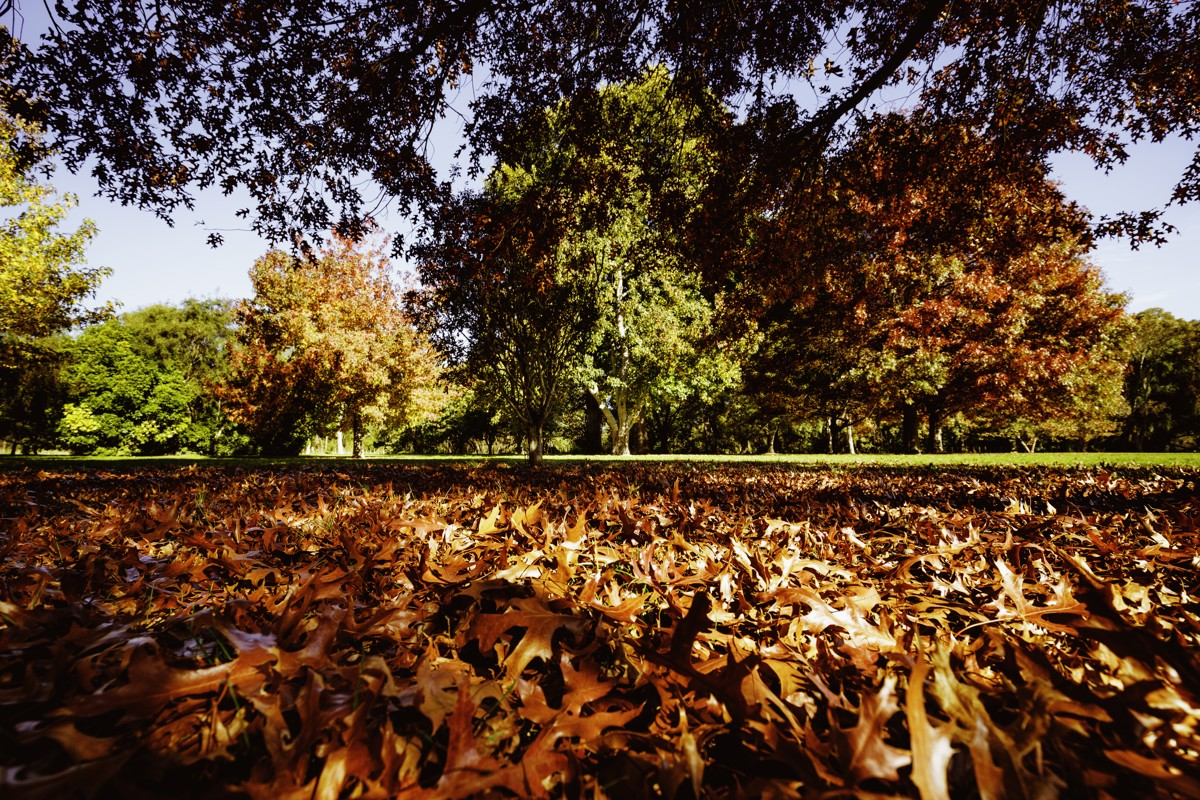 Deeply Into Autumn