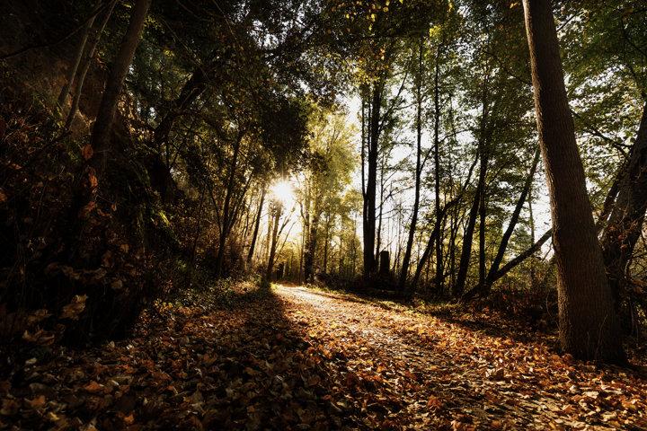 Autumn Trail Light - Sun shining through the trees late autumn on the Hawke's Bay trails near Puketapu